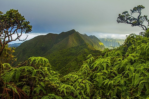 The Ko'olau summit on the island of O'ahu in Hawai'i where researchers found that biodiversity is higher in forests on older islands than on younger ones, but that this effect may be diluted by introduced species. (Picture: William Weaver)
