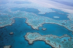 "The ""coral triangle"" near Australia is a hotpot of fish species richness. (Photo: Pixabay)"