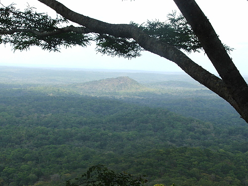 An intact East African coastal forest patch near the Selous Game Reserve. Photo: Chris Barratt