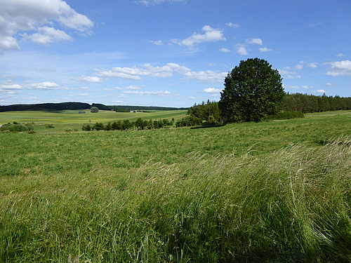 "The data used in the study come from the project ""Biodiversity Exploratories"". The picture shows one of the study sites in Brandenburg (Schorfheide-Chorin; photo: Beatrix Schnabel)."