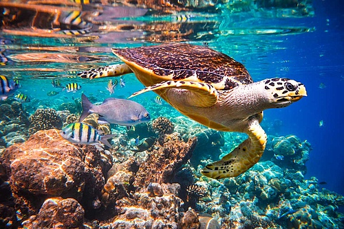 The importance of climate change as a cause of global species loss is increasing steadily. The most threatened ecosystems are coral reefs. Image: Andrey Armyagov/Shutterstock.com