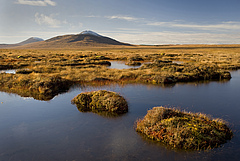 Blanket Bog of the Flow Country Forsinard (Photo: Eleanor Bentall/rspb-images.com)