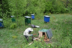 An inspection to assess bear damage to an apiary in the Polish Carpathians (photo: Teresa Berezowska-Cnota).