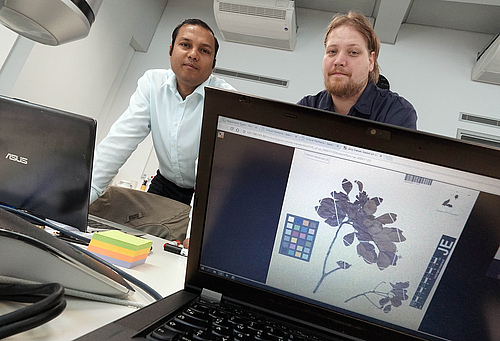 Jitendra Gaikwad and Martin Hochmuth from the iDiv Biodiversity Informatics Unit (BDU) work on a new tool for managing multimedia data for science (photo: Jan-Peter Kasper/FSU).