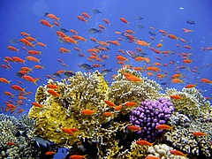 Coral reefs provide habitat for many fish species. (Photo: Pixabay)
