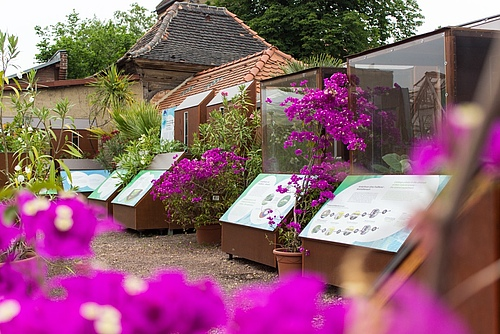 The exhibition boxes at the Botanical Garden of the Martin Luther University Halle-Wittenberg (Photo: Stefan Bernhardt, iDiv)