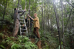 Scientists take samples in the tree diversity experiment BEF-China in August 2017. Picture: Helge Bruelheide