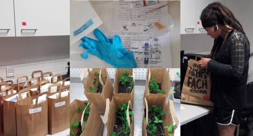 Practicum bags with clover plants, caterpillars and materials, packed by Jennifer Gabriel (right). Pictures: NM van Dam, FSU Jena/iDiv