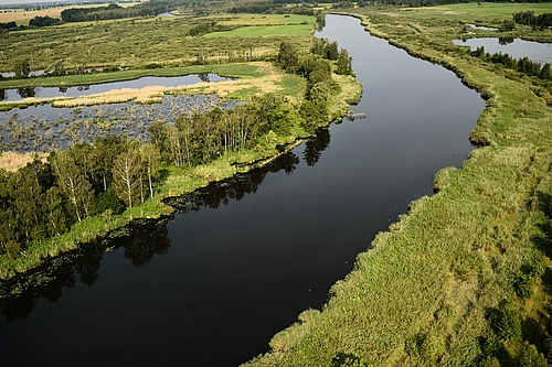 A prime example of a successful rewilding project in Germany is the Oder river delta (picture: Zolvin Zankl / Rewiling Europe).