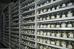 Permanent storage of different barley accessions in the cold storage room of the gene bank. (Picture: IPK Gatersleben)