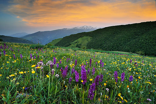 Central Apennines rewilding area, Italy (Photo: Sandra Bartocha / Wild Wonders of Europe / Rewilding Europe).