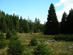 The Schlöppnerbrunnen peatland is home to the elusive Desulfosporosinus. This rare yet highly active bacterium contributes substantially to biochemical cycling, such as sulfate reduction, ultimately controlling methane production (photo: Dept of Microbiology and Ecosystem Science/University of Vienna).